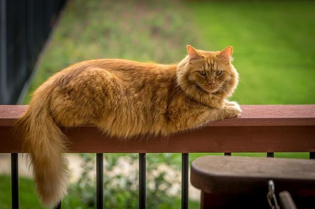 Perché i gatti amano camminare in bilico sulle ringhiere?