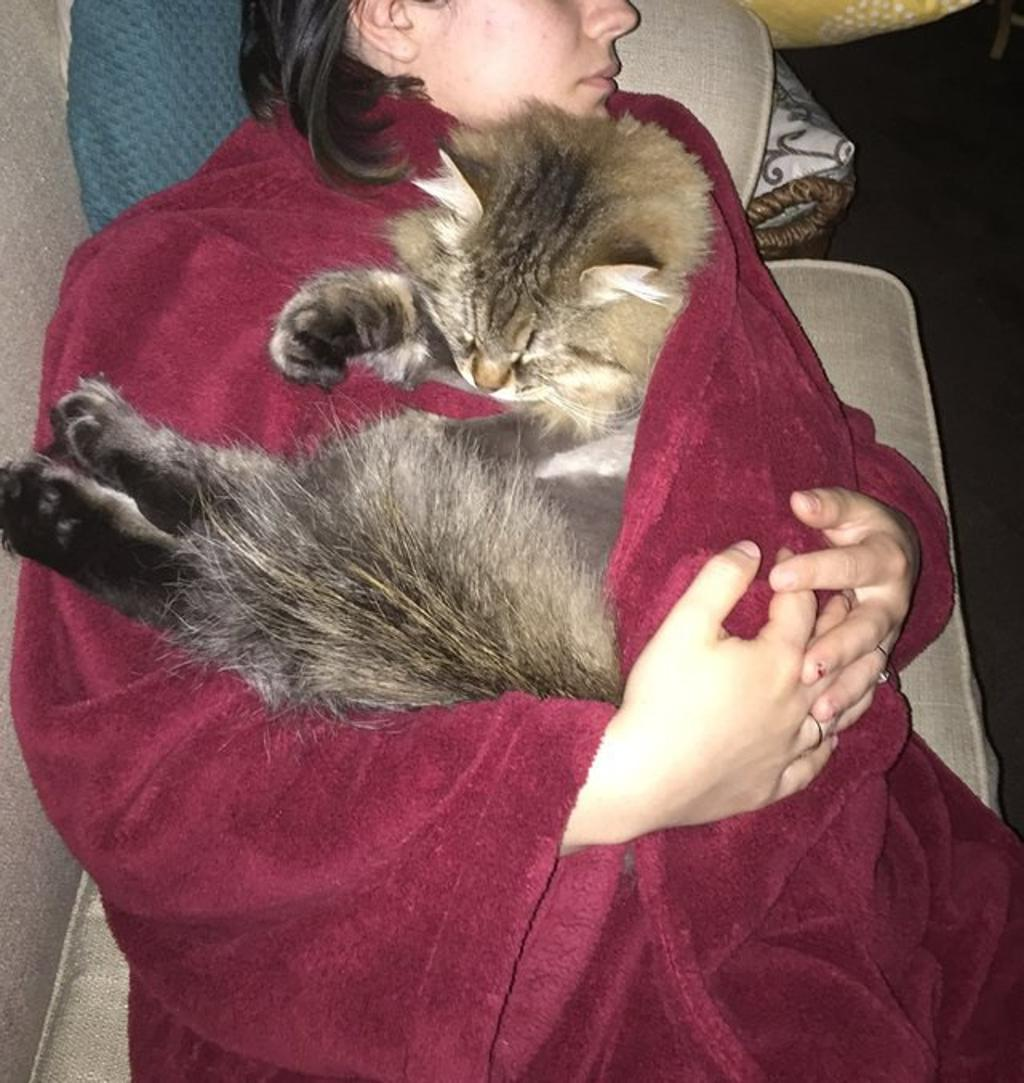 Gatto percepisce gravidanza in anticipo e coccola la sua umana