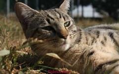 Appello per adozione: Menny cerca casa