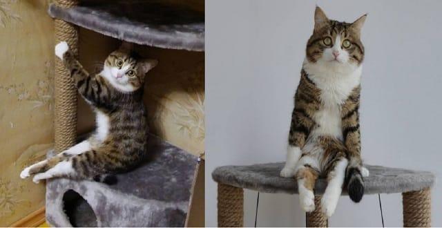Rexie, il gatto disabile diventato una star del web
