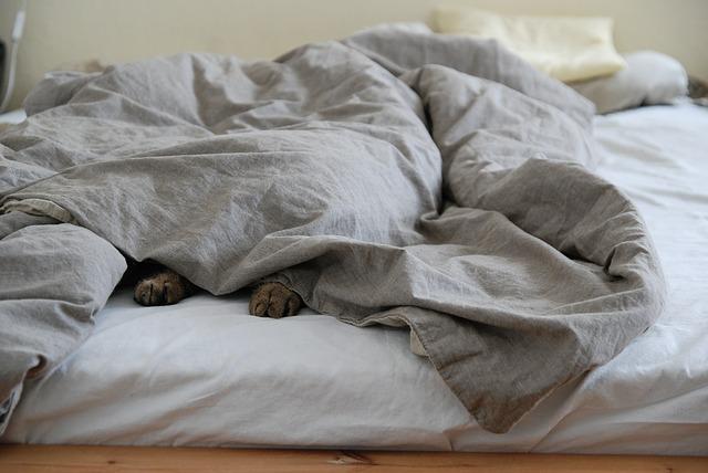Perché i gatti amano dormire sul letto?