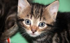 Fare una sorpresa al gatto: ecco come fare