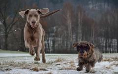 Prendere un secondo cane: sì o no? I consigli da seguire