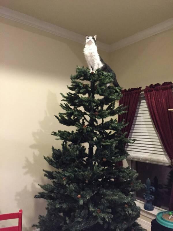 cani e gatti a Natale