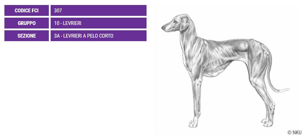 Azawakh, carattere e prezzo - Razze cani
