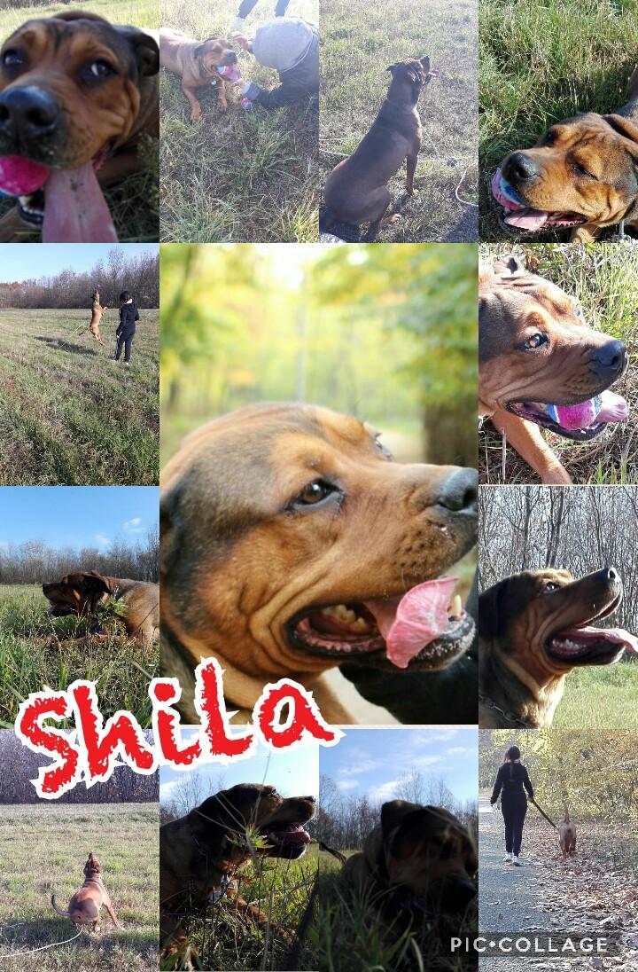 Appello per adozione: Shila cerca casa, aiutiamola