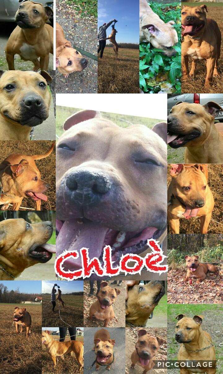 Chloe cerca casa: appello per adozione