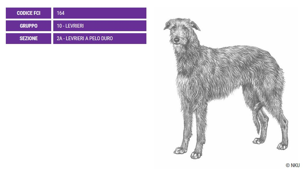 deerhound_