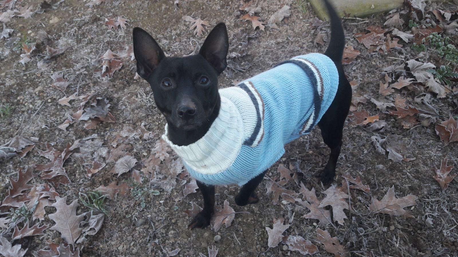 Rocco cerca casa: appello per adozione