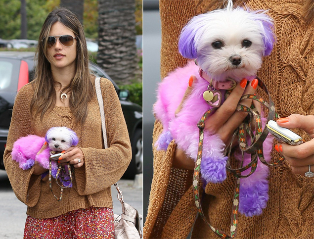Alessandra Ambrosio and her Stylish Maltese