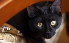 Nombres de gato: ¿cuál es el mejor nombre para un gato?