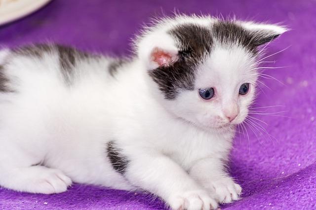 Come avvicinarsi e accarezzare un gatto nel modo giusto
