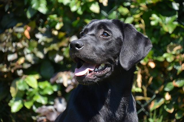 Antiparassitari per cani contro zecche e pulci: quale scegliere?