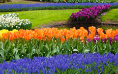 Tulips and Hyacinths - Gorgeous in The Field, Lethal at Home