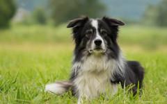 Sensi del cane: quali sono e le curiosità