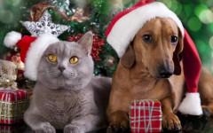 Regalare cane e gatto a Natale: le regole da seguire