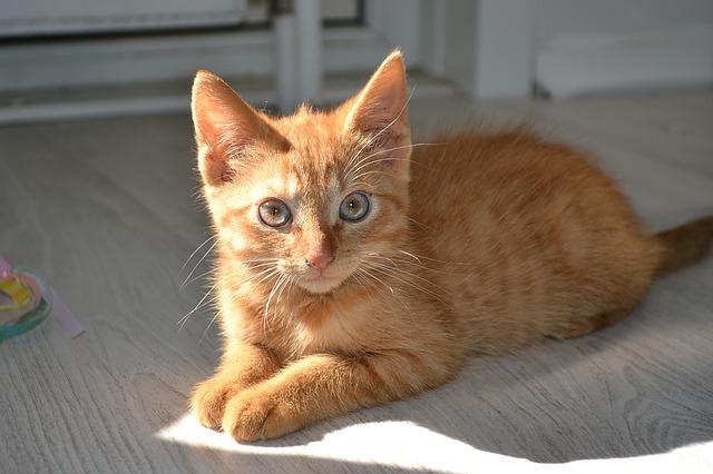 Perché il gatto si strofina sulle gambe delle persone?