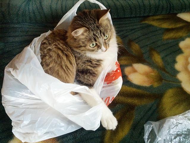 Gatti leccano sacchetti di plastica