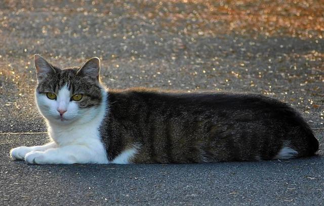 Gatto salvato dai vigili del fuoco sotto un marciapiede