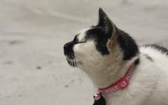 Il collare è pericoloso per gatti? Scopriamolo!