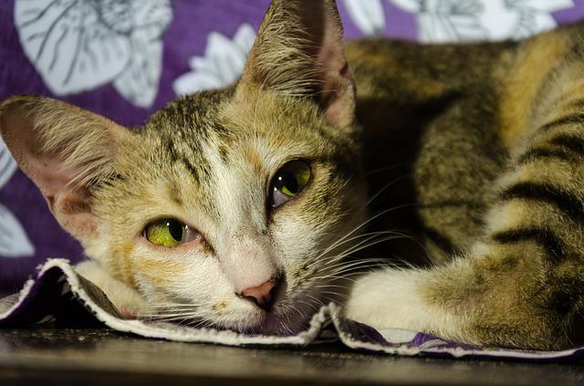 Gato triste: mi gatito está deprimido, qué puedo hacer