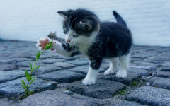 Poisonous Plants for Cats: what are they?