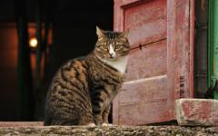 Gatto e porta: sai perché è fuori vuole entrare, è dentro e vuole uscire?