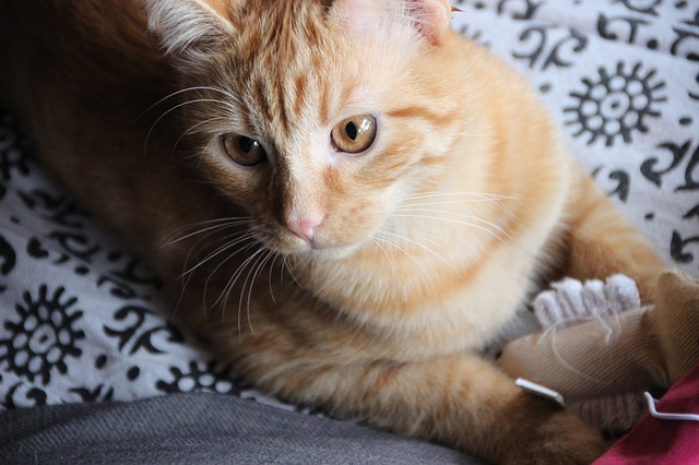 Giochi di attivazione mentale per gatti: quali sono?