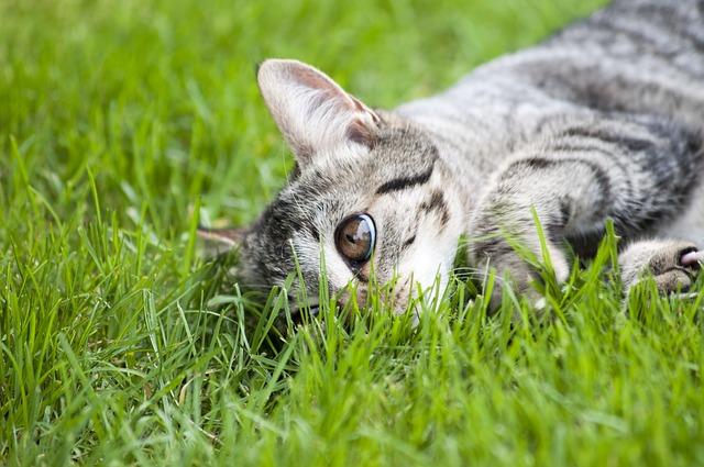 Comportamenti dei gatti: gli istinti da predatore