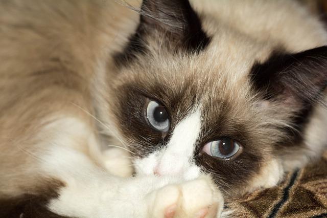 dogalize   il pet social network per il tuo cane e gatto