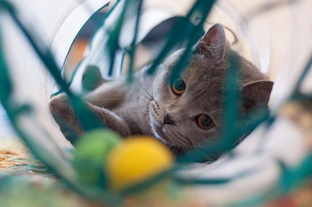 Regole di vita del gatto domestico: quali sono?