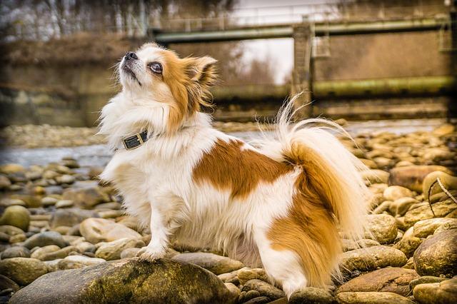 10 buoni motivi per vivere con un cane: quali sono?