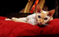 Arte manipolatoria dei gatti: basta un miao per comandare