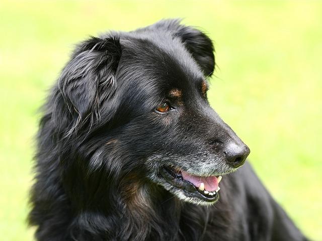 A quale età un cane diventa anziano?