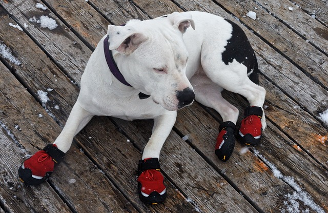 Dog Boots: do Dogs Really Need Dog Boots?