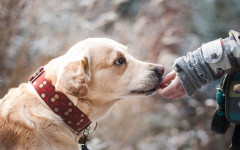 Cómo enseñar a un perro: come adiestrar a tu mascota
