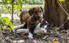 Perros y gatos: ¿pueden lograr convivir juntos?