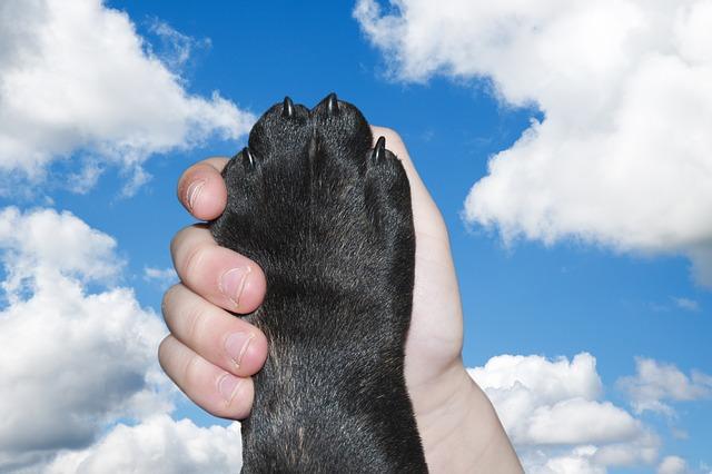 Huellas perro: un rastro de tu mascota