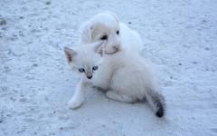 Cani e gatti spaventati dai botti: è giusto vietarli?