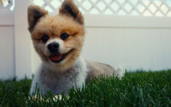 Feeling Blue Lately?: Take a Look at a Smiling Dog