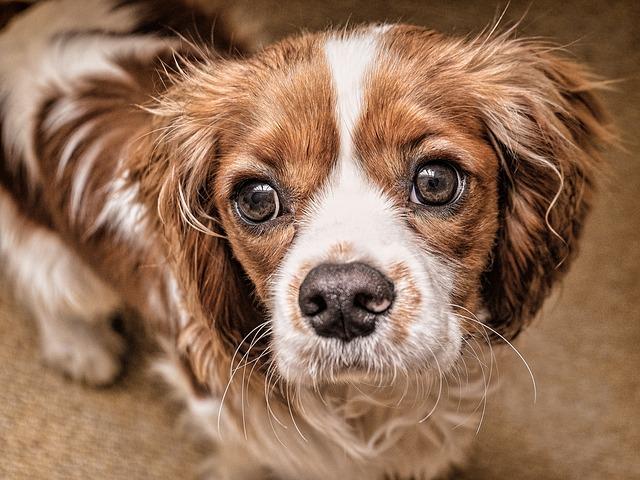 Vista del cane e vista dell'uomo: il confronto