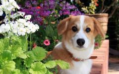È morto il mio cane: come reagire e cosa non bisogna fare