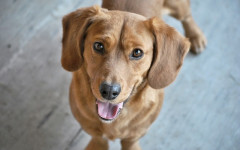 Cani sorridono: perché i cani lo fanno?