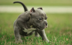 Come presentarsi a un cane per la prima volta