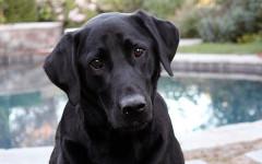 Segnali di calma nel cane: quali sono? Scopriamolo insieme!