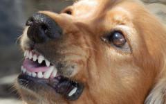 Mordedura de perro: ¿qué hacer si te muerde?