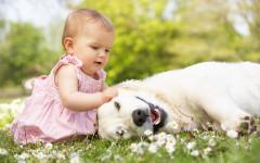 Cane e nascita bambino: come accoglierà il nuovo arrivato