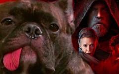 Gary, il cane di Carrie Fisher diventa attore in Star Wars