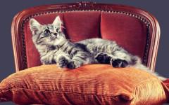 Gatti al potere: i felini che risiedono ai vertici
