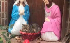 Gatto nel presepe: la foto del felino diventata virale